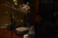 八重桜(撮影/大仲宏忠)